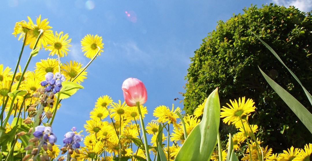Garten: Unterschiedliche Arten von Beeten